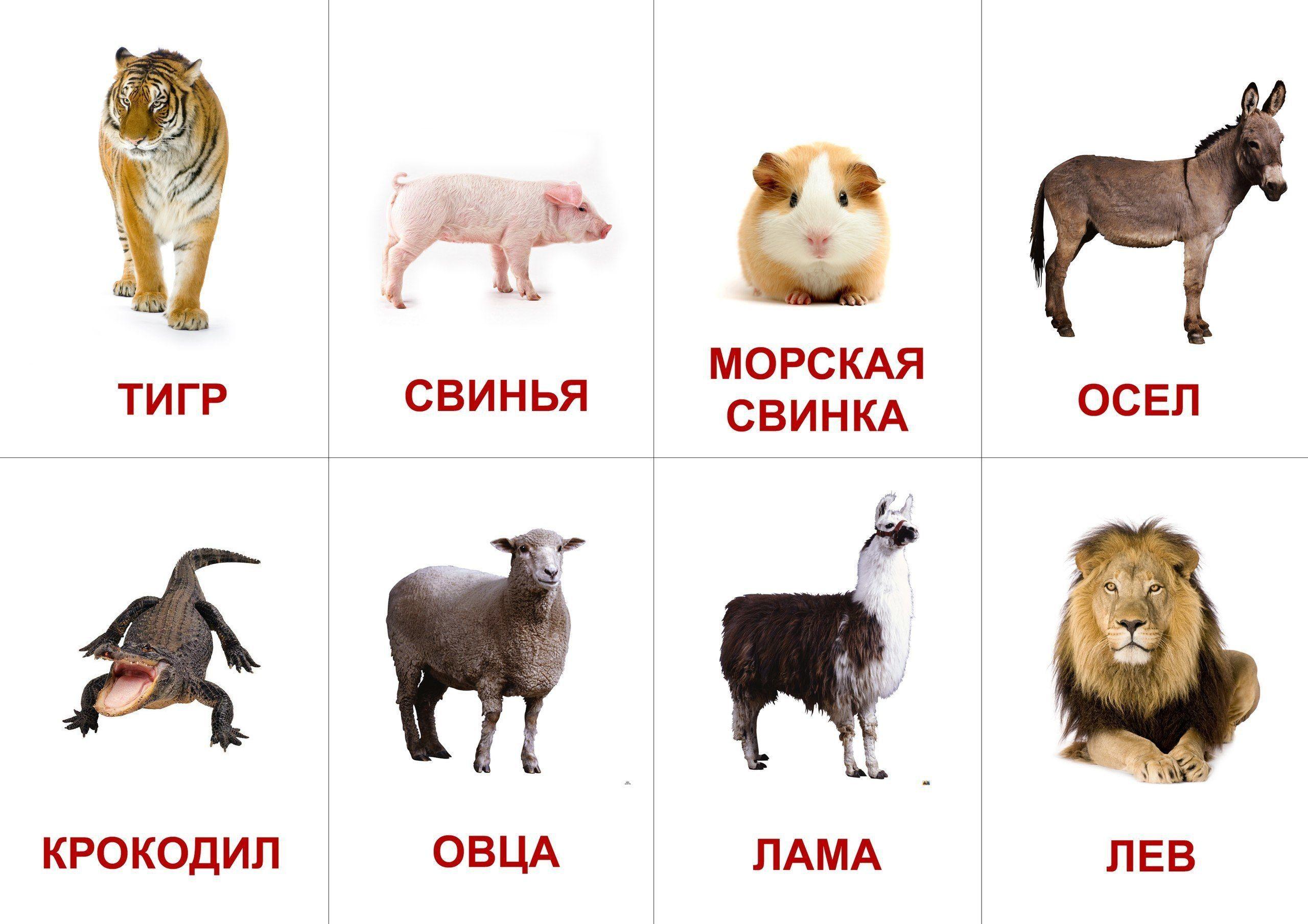 Печать развивающих карточек для детей в Москве | фото 3