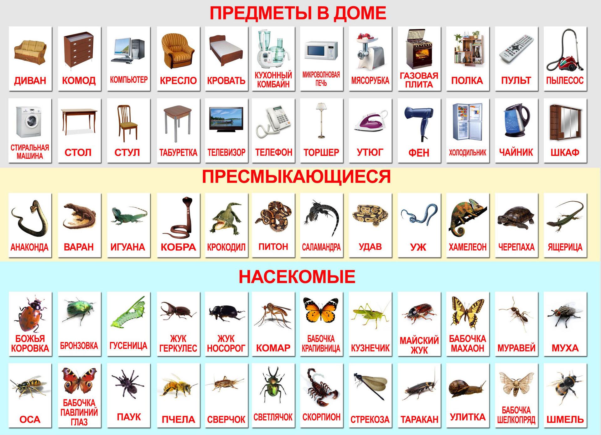 Печать развивающих карточек для детей в Москве | фото 5